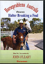 Halter Breaking the Foal by John OLeary